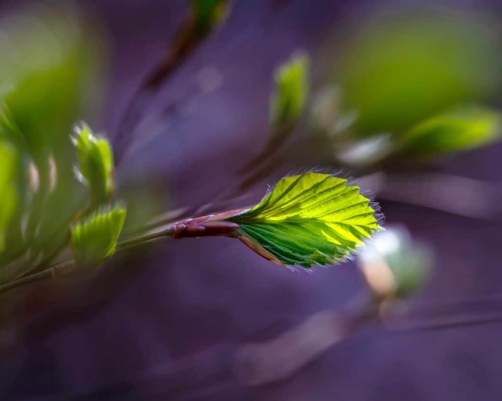 wiosenne młode liście makrofotografia natury 1024x819 - Makrofotografia poradnik i 7 pomysłów