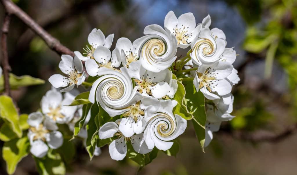 zakręcone kwiatki 1024x603 - Zakręcone liście w affinity photo