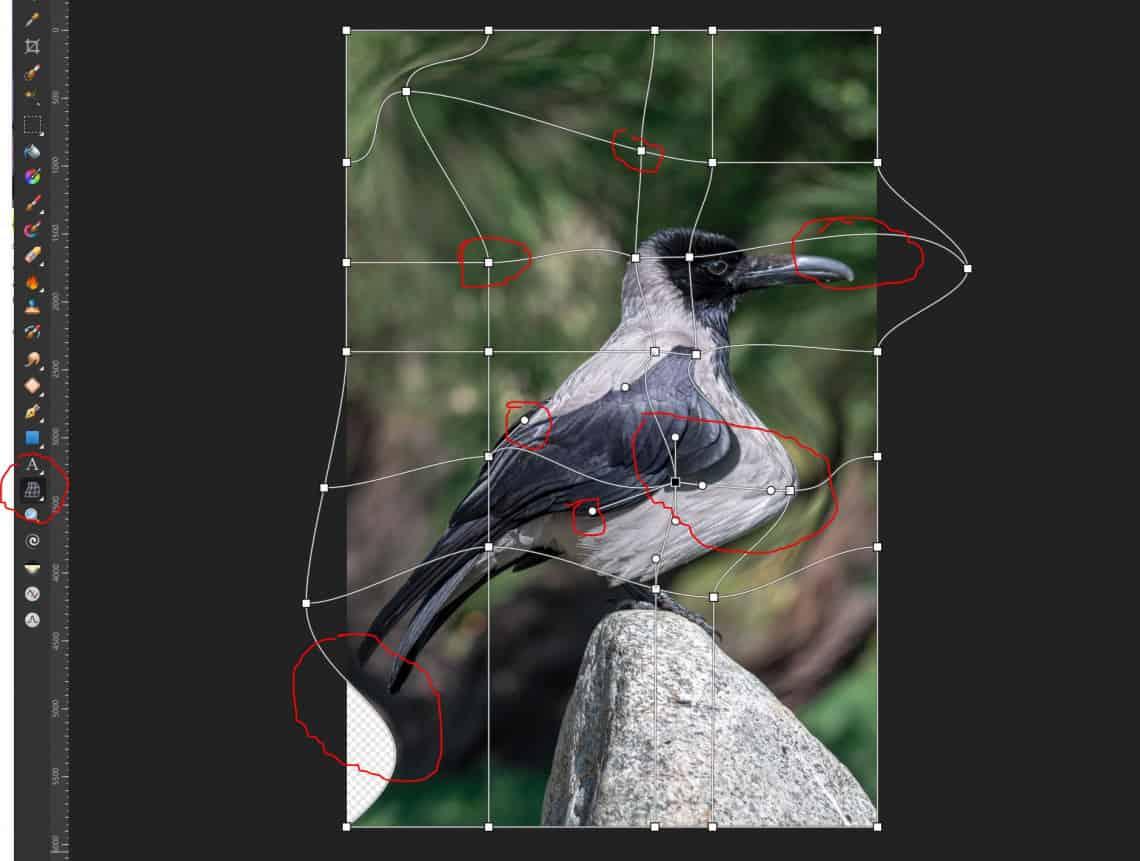 Warp mesh w affinity photo - elementy siatki