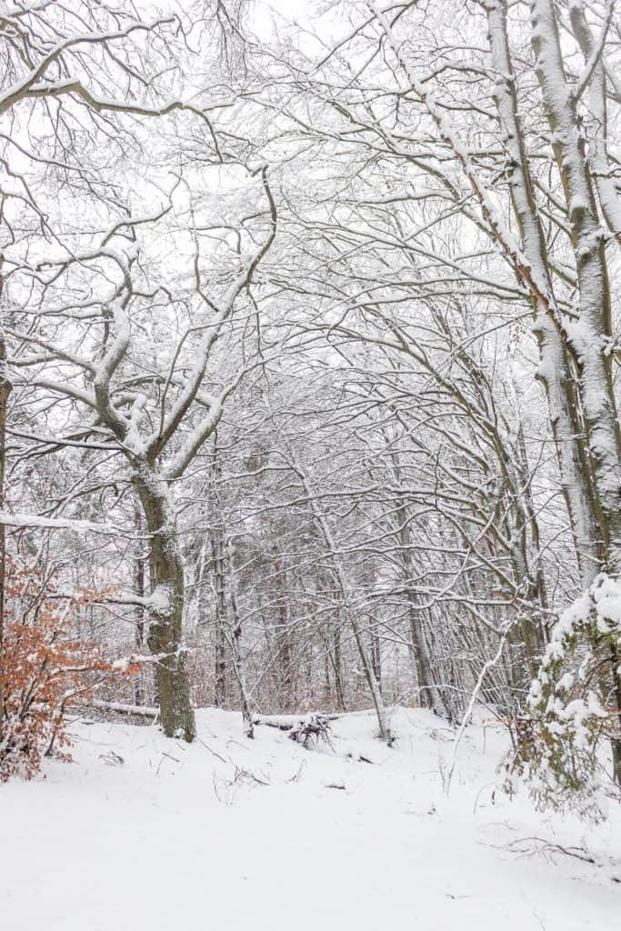 Zimowy krajobraz w Gdansku Kielpinek Park Krajobrazowy 16 683x1024 - Rękawiczki fotograficzne pgytech - 5 ważnych zalet