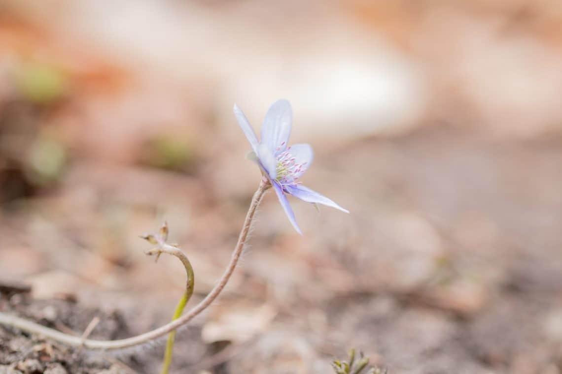 Makrofotografia w lesie - natury i przyrody - Tamron 90mm f2.8